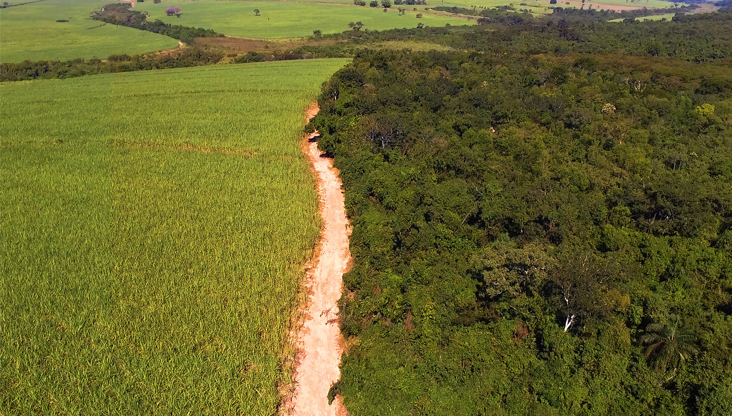 A historic moment for Mercosur and the EU, a new horizon for sugarcane
