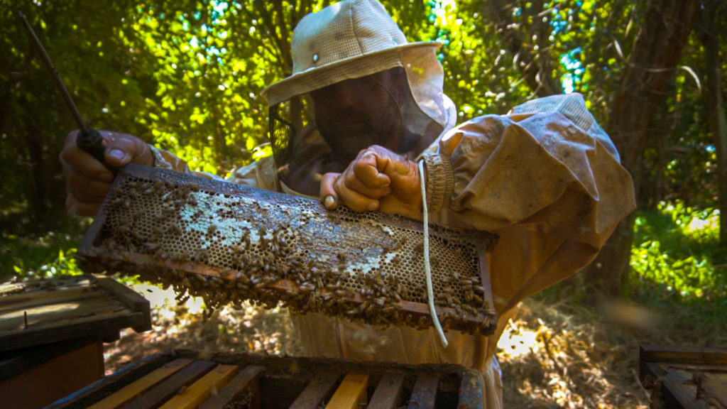Stepping up on biodiversity – learnings from Brazilian sugarcane