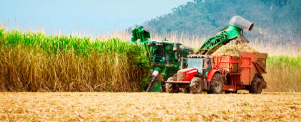 Sugarcane National Commitment